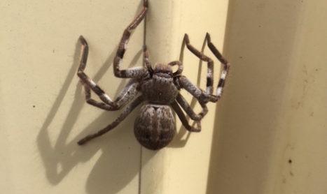 Pest Control Treatment Melbourne